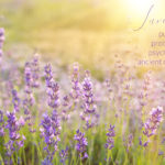 lavender, plant medicine, lavender spirit, avalon
